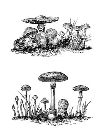 Victoriaanse graveren van agaricus paddestoelen. Digitaal hersteld beeld van een midden van de 19e eeuw Encyclopedie.