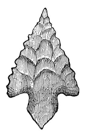 flint: Victorian engraving of a flint arrow head. Digitally restored image from a mid-19th century Encyclopaedia.