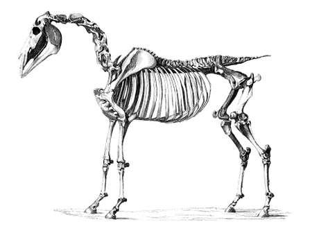 gefotografeerd vanuit een boek met de titel van de 'Nationale Encyclopedie', gepubliceerd in Londen in 1881. Copyright heeft over dit kunstwerk is verstreken. Digitaal hersteld.