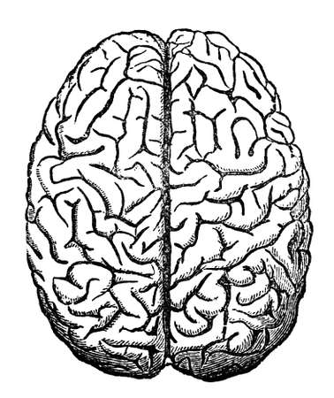 restored: Victorian engraving of the human brain. Digitally restored image from a mid-19th century Encyclopaedia.