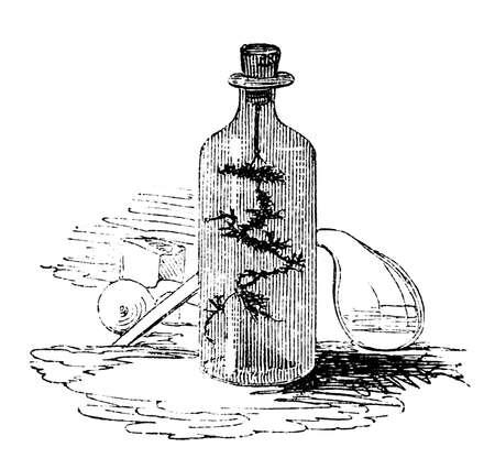 pocion: Grabado del siglo 19 de una poci�n m�gica