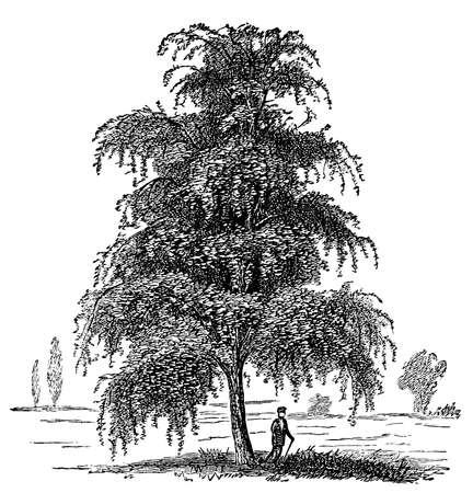 Digital restauriert aus einem späten Jahrhundert 19. Jahrhunderts Standard-Bild - 96494903