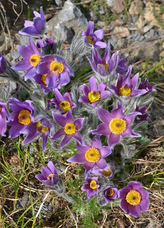 Violet flowers in a vertical format