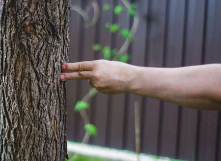Bare punch in tree bark