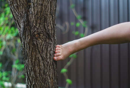 Kicking a bare foot in a tree bark