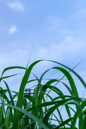 Macro of green lawn against cloudy sky
