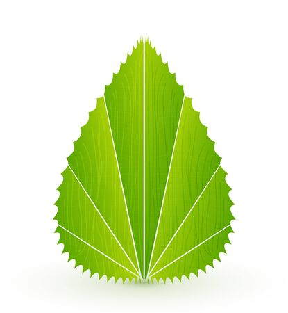 Vector leaf concept. Nature abstract symbol Vector