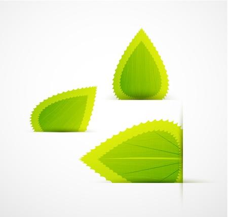 Leaf labels Vector