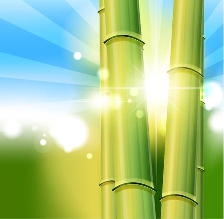 日本料理: 竹の自然の背景