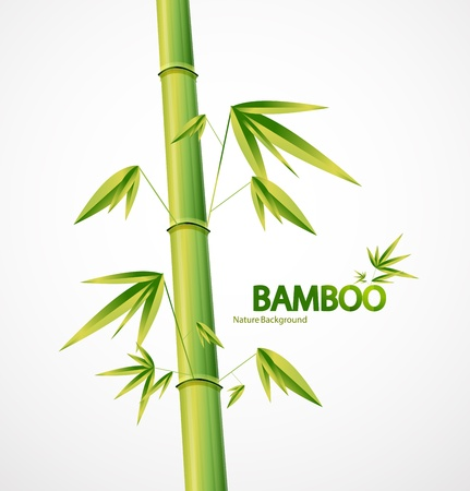 Bamboo stem abstract nature background Stock Vector - 11008348