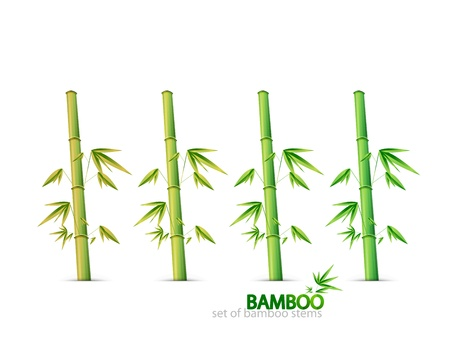 Bamboo stems Vector