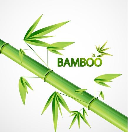 Vector bamboo background Illustration