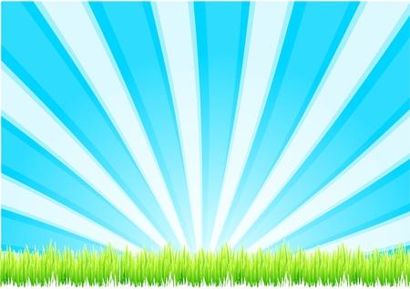 Grass background Stock Vector - 13191011