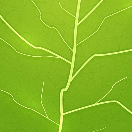 Vector fresh green leaf texture Stock Vector - 17776344