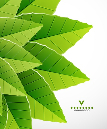 Green leaves nature design Stock Photo - 18001052