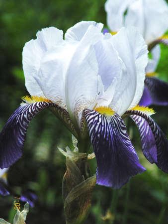 庭の花のクローズ アップの写真