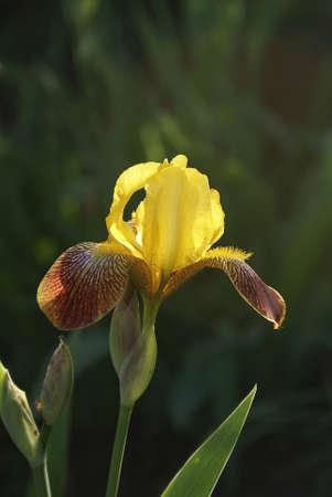 Photos of garden flowers closeup Stock Photo