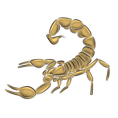 Scorpion isoliert auf weißem Hintergrund, Vektor-Illustration. Illustration