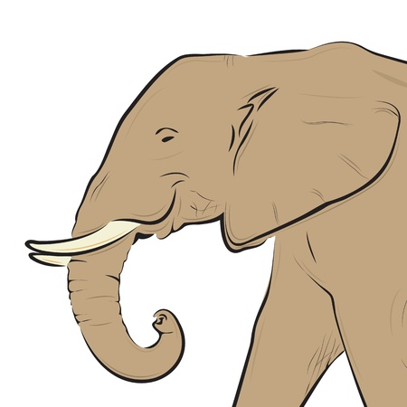 Elephant head drawing isolated on white, vector illustration. Vector