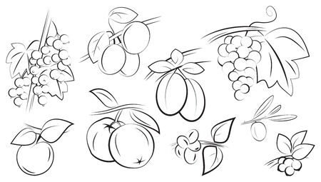 fruits and berries on branches with leaves set isolated on white vector illustration