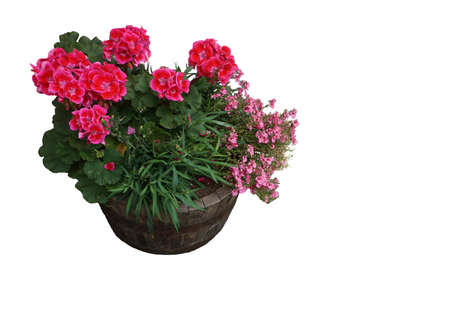 City pot with purple flowers in a wooden pot Isolated background Stock Photo