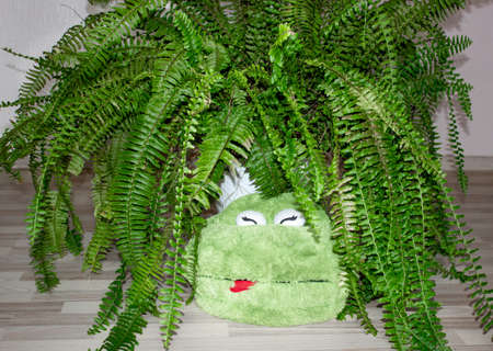 Funny green toy frog dozing among the branches of a home fern. The idea of relaxation and comfort. Banco de Imagens