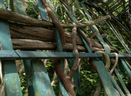 Side view. Wooden branches surround the metal rods of the fence. Confusion concept.