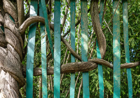 Wooden branches surround the metal rods of the fence. Confusion concept.