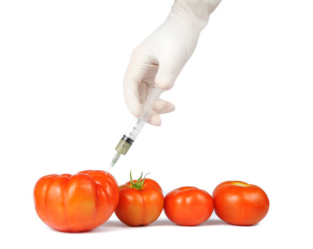 injection of some substance into fresh red tomatoes  photo