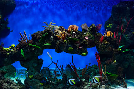 Tropical fish swimming near colorful corals, rocks and rock in big aquarium, diving, nature background, wildlife