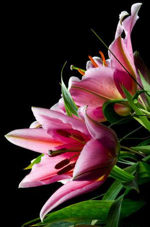 Bouquet of pink lilies with white-pink petals and green leafs on black background Lizenzfreie Bilder