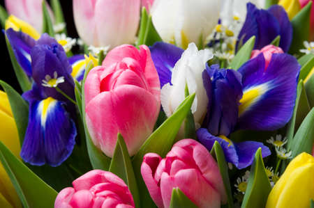 Spring flowers in colorful bouquet, bunch of freshly picked pink and yellow tulips, blue and white irises and small camomile, nature background, selective focus