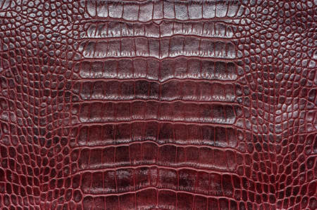 Crocodile leather for manufacturing of luxury shoes, clothes, bags and other fashion accessories, high quality natural seamless material sample, textured background, top view