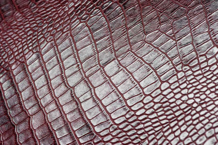 Crocodile leather for manufacturing of luxury shoes, clothes, bags and other fashion accessories, high quality natural seamless material sample, textured background, selective focus