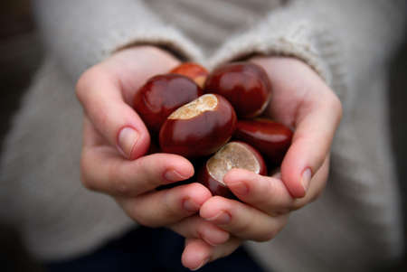 conker: Handful of conkers with slight added vignette. Stock Photo