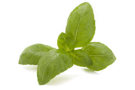 Fresh basil leaves on a white background Stock Photo