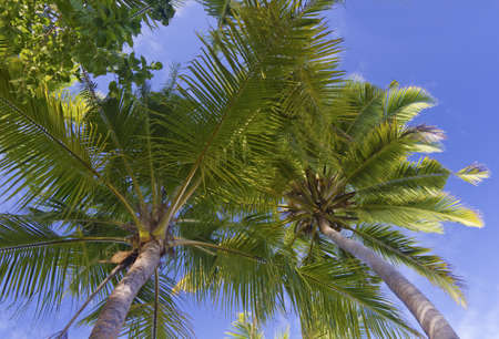 view from underneath the palm trees