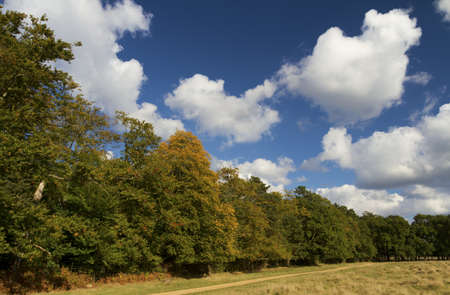 Early Autumn with cloudscape