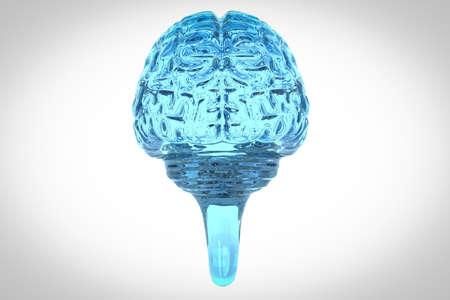 backview: Glass human brain backview