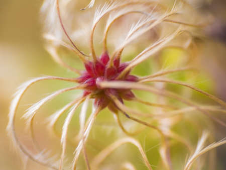 Macro view on complex flower illustrative Imagens
