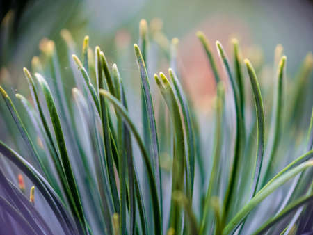 Macro view on green feather plant Imagens