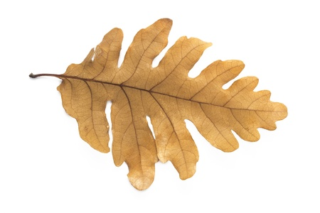 quercus: Leaf Collection