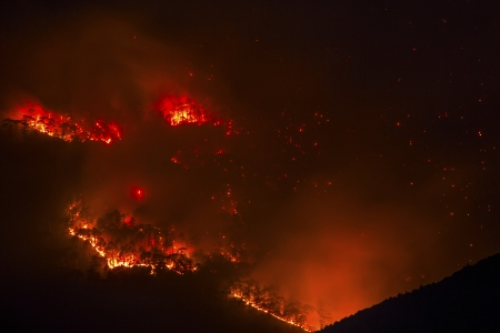 the biosphere: Forest fire burning at night Stock Photo