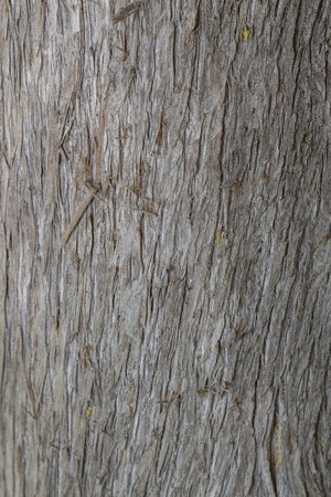 hinoki: Cypress bark texture clouse up fill all plane background Stock Photo