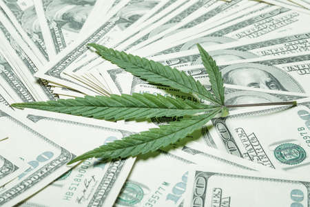 A sheet of marijuana for money, dollars and cannabis, a legal and black market business concept photo Stock Photo