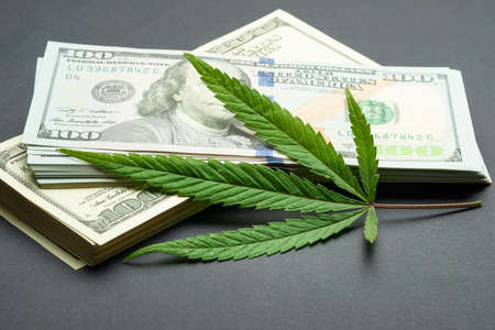 Black market of drugs trade, dollars and cannabis concept photo