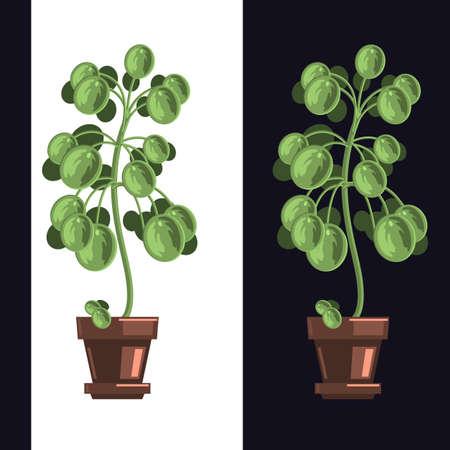 Indoor Home Plant Houseplant Flat Illustration Vector Design