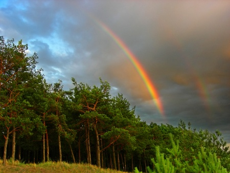Rainbow over the forest Stock Photo - 8231504