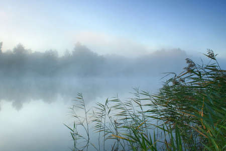 Morning mist over the forest lake photo