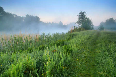 Misty dawn at the lake Stock Photo - 8423034
